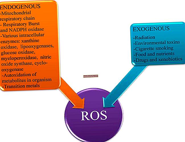 Fattori che possono essere endogeni ed esogeni in un'azienda